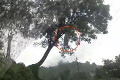 Terekam Kamera, Penampakan Seram Kuntilanak Di Pohon