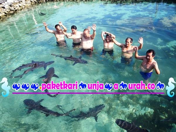 foto wisatawan di kolam hiu karimunjawa paket 3h2m