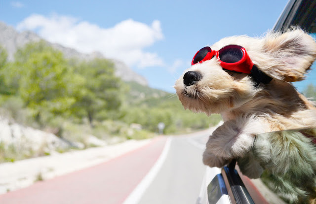 National Pet Month: 5 Travel Tips for Dog Owners