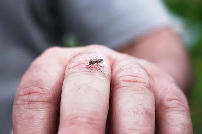 breaking-Danger-Bell---Dengue-Become-More-Dangerous-in-world-blog-vedika-news