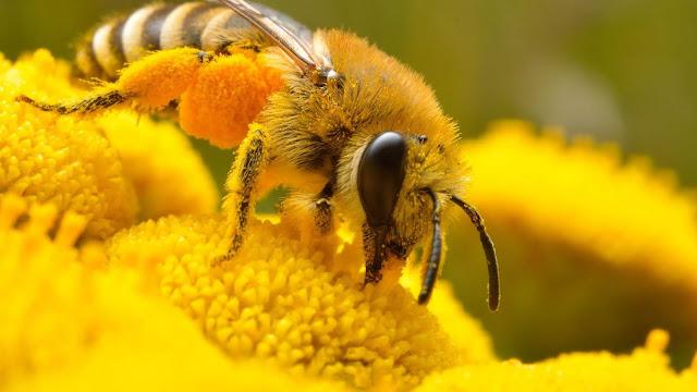 bee wallpaper