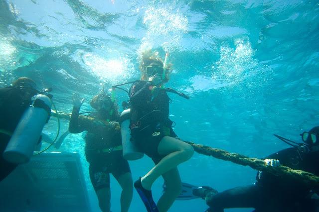 Plongée barrière de corail à Cairns