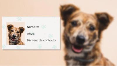 https://www.notasrosas.com/Perros y gatos tendrían cédula en Colombia