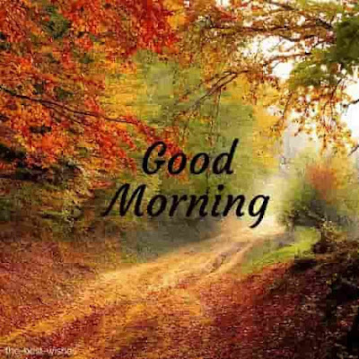 nature high quality good morning images hd