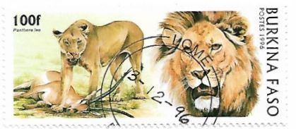 Selo Leões e a caça