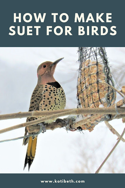 How to make suet cakes for birds. This easy recipe is great for kids to make. This is the best home made suet cake or suet plug recipe for a bird feeder in your backyard. Homemade recipes like this one are easy to make. If you need ideas to make your own suet, this has several things that you can add.  Includes what is suet and DIY step by step instructions. #suet #birds #birdfeeder