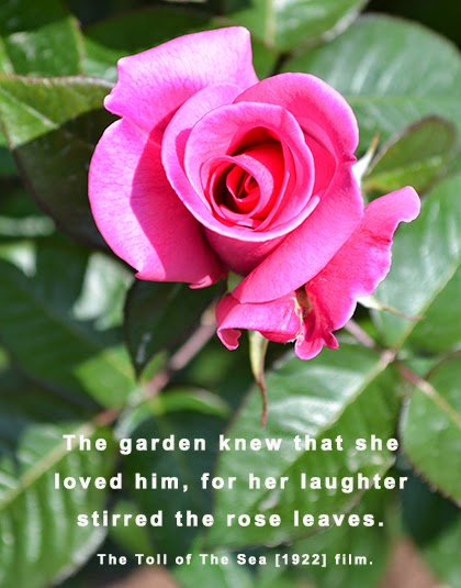 Roses quote - shewandersshefinds.com