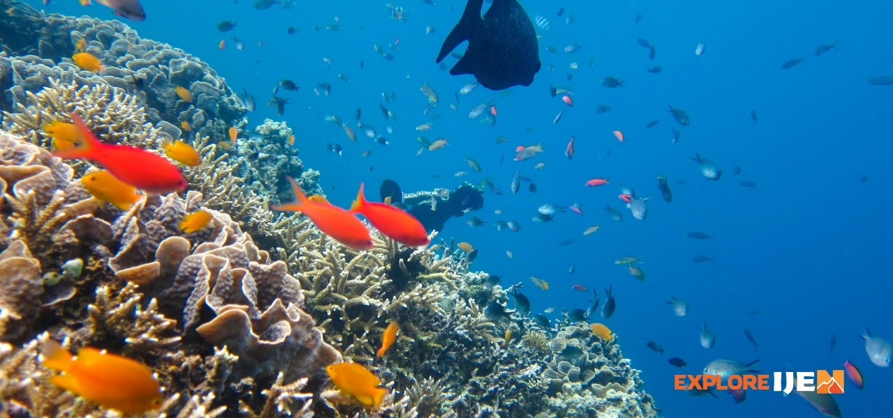 snorkeling di pulau Menjangan dan Tabuhan