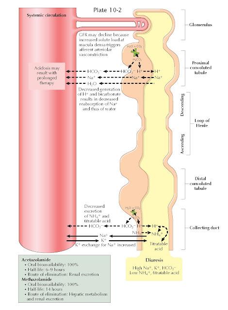 ARBONIC ANHYDRASE INHIBITORS