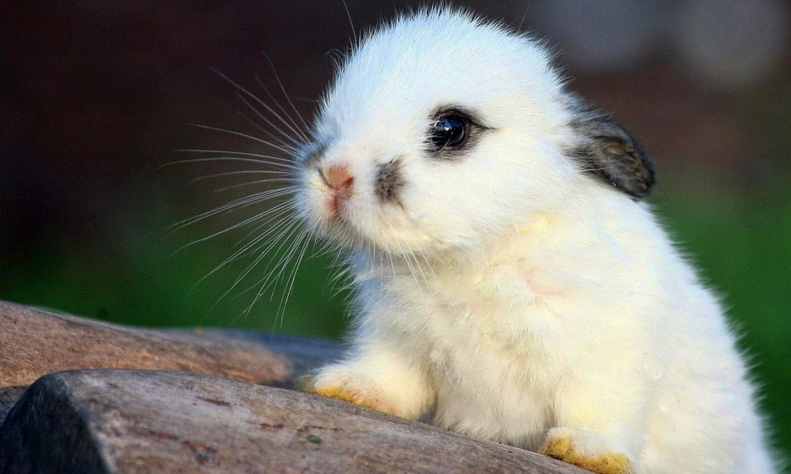 cute rabbit hd wallpapers