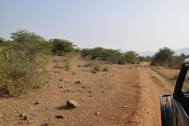 Sariska Wild Life