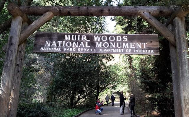 O que conhecer no Parque Nacional de Muirwoods na Califórnia
