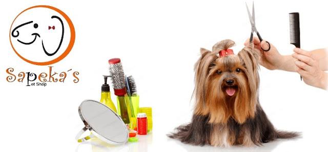 Posso tosar o cachorro em casa?