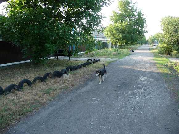 Авдеевка. В городе много бездомных собак