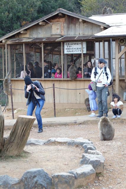 Iwatamaya Monkey Park