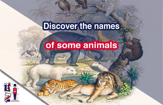 Discover the names of some animals