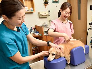 tratamento estéticos de cães com paralisia
