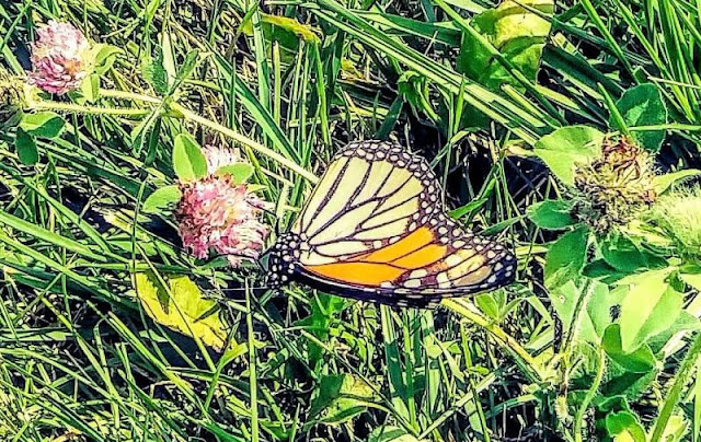 The  Border Wall Butterfly Effect, Metamora Herald