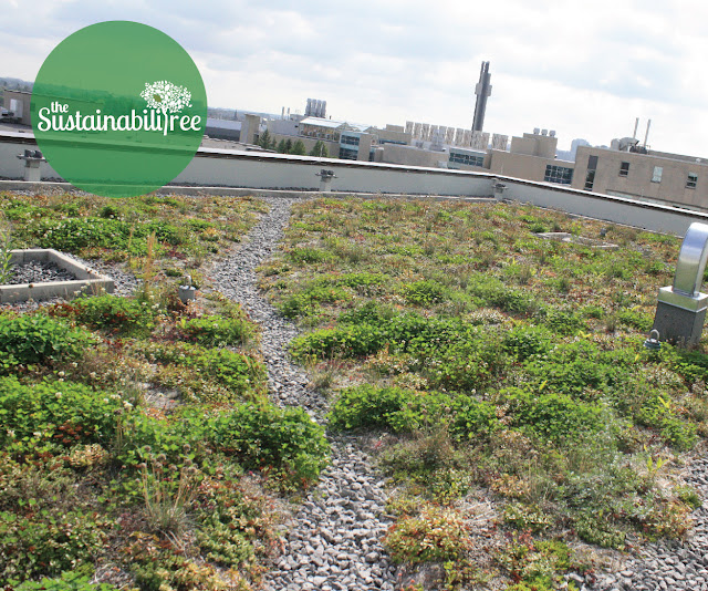 Green roof on the FSS building