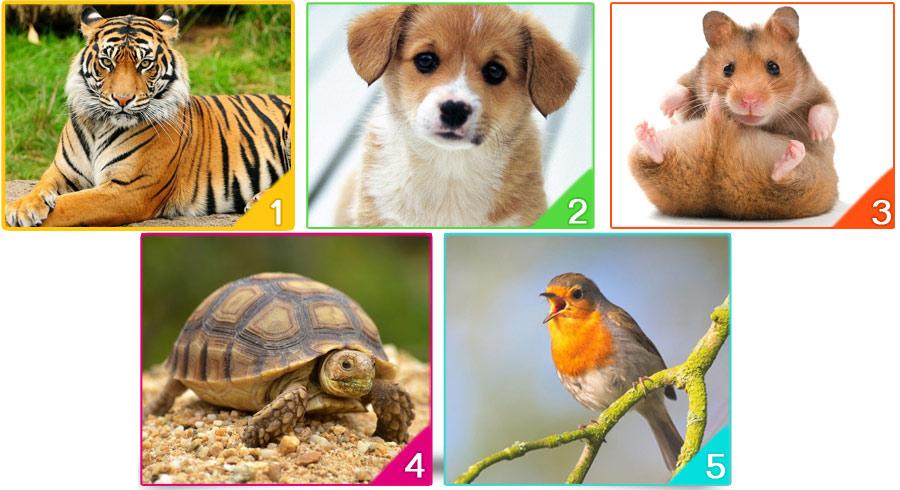 Test: ¿Cuál Animal Adoptarías?Tu elección  revelará tu estado emocional