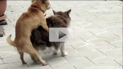 Dog & Cat Do Video - live scene caught on Camera