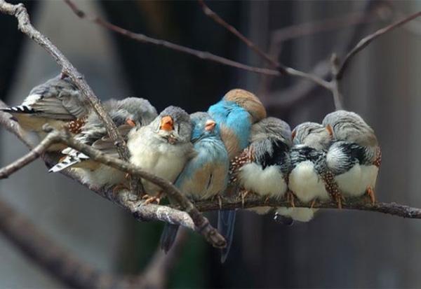 Ngất ngây với 19 bé động vật tí hon làm bạn cảm-ngay-tắp-lự