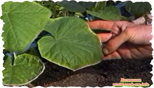 признаки недостатка микроэлементов у растений