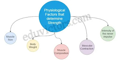 Physiological Factors Determining Components of Physical Fitness (Q and A) - Chapter Physiology and Injuries in Sports - Class 12 Physical education  (#class12PhysicalEducation)(#eduvictors)(#cbse)