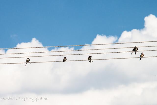 Fecskék a dróton ülnek Klárafalva környékén