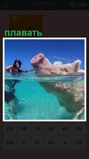 в воде плывет свинья высоко задрав свой пятачок