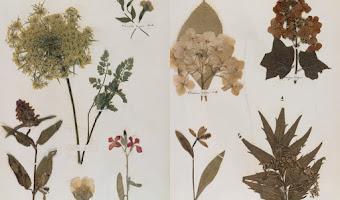 El herbario de Emily Dickinson: botánica y poesía en la era victoriana
