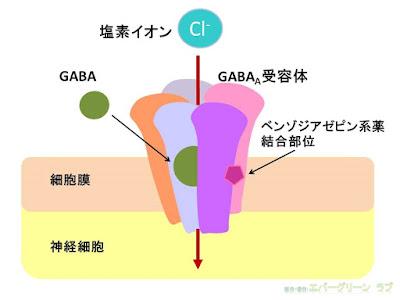 ベンゾジアゼピン系薬の作用機序 神経終末 GABA受容体結合部位 イラスト 睡眠薬はどうして効くのか 睡眠障害 不眠症の薬の効き方 塩素イオン Cl-