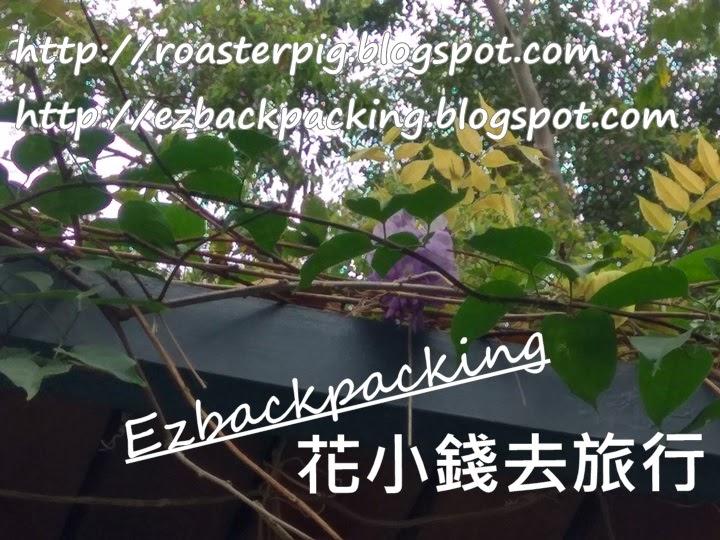 銅鑼灣紫藤花2021
