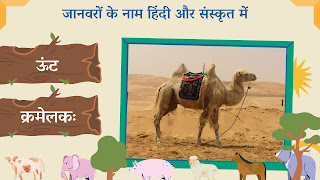 camel name in sanskrit and hindi with images
