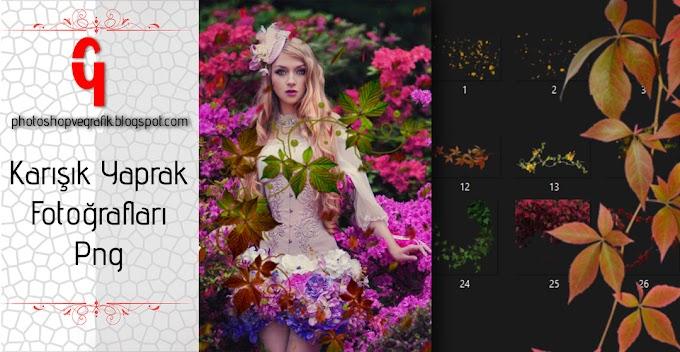 Yaprak Fotoğrafları Png