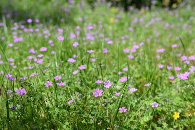 fotos de flores sin copyright
