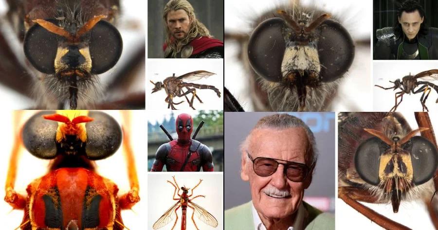 Thor, Deadpool, Loki,  Black Widow