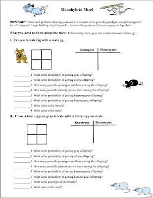 Printables Monohybrid Cross Worksheet classroom freebies genetics the monohybrid one factor cross related posts