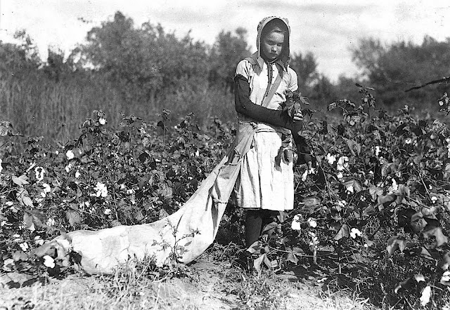a photograph by Lewis Hine 1916, a girl worker picking cotton