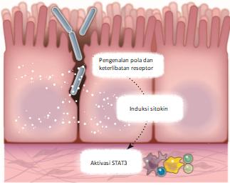 Induksi karsinogen oleh mikroba yang telah masuk ke dalam jaringan