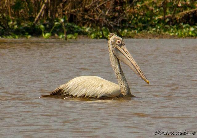 water birds, Lake TonleSap, Cambodia