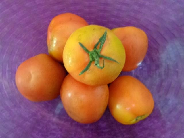 Kumpulan foto atau gambar buah tomat