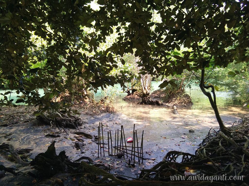 Jebakan Kepiting di Sungai Pantai Pangi