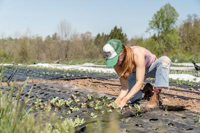 Voluntario en granjas orgánicas WWOOF