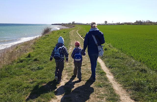 Küsten-Spaziergänge rund um Kiel, Teil 3: Raps, Steine und Meer bei Hohenfelde. Der Spazierweg oben an der Steilküste ist breit genug für die ganze Familie.