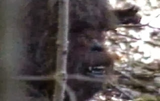 Bigfoot exist! Sasquatch Team claimed on a Bigfoot footage in Kentucky