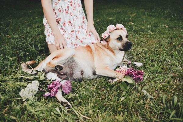 Gemas! Anjing Betina Lakukan Pemotretan Kehamilan, Nih Hasilnya