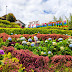 Alejandra: The Instagram-Worthy Flower Garden in Cebu