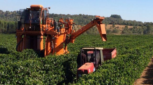 Crise no setor do café pode piorar os dados de desemprego no Brasil