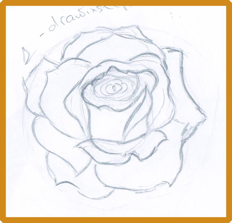 how to draw a rose - 800×768